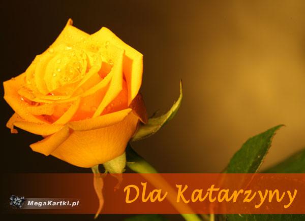Dla Katarzyny