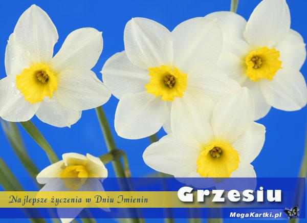 Imieniny Grzesia