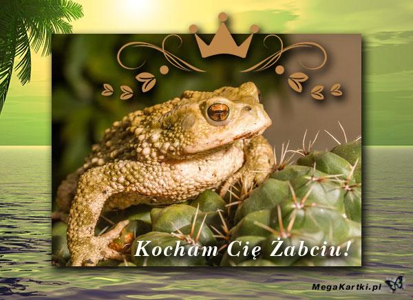 Karteczka dla Żabci