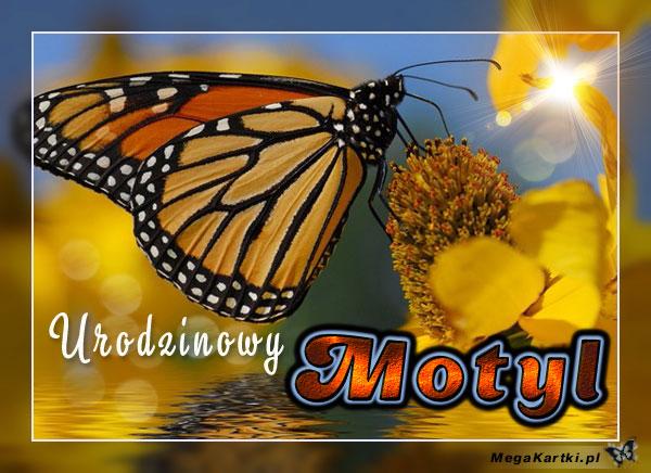 Urodzinowy motyl