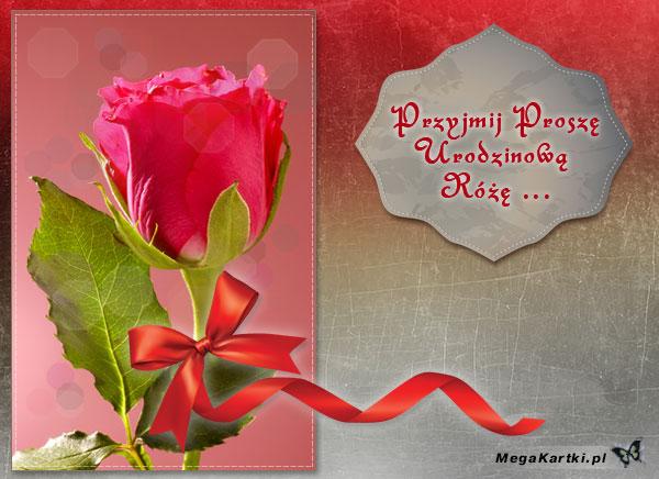 Urodzinowa róża dla Ciebie