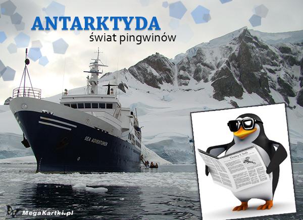Świat pingwinów