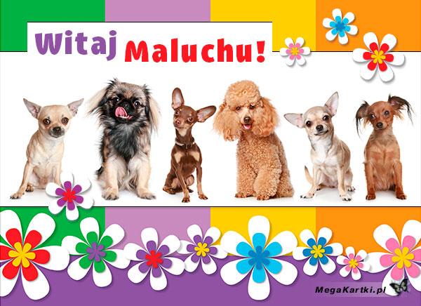 Witaj Maluchu!