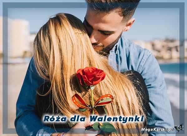 Róża dla Walentynki