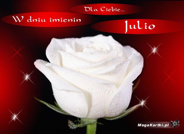 Śnieżnobiała róża dla Julii