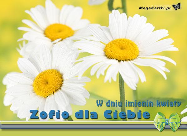 Kwiaty dla Zofii