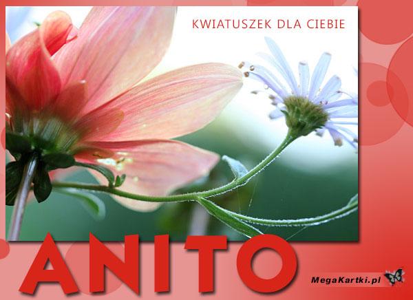 Kwiatuszek dla Anity