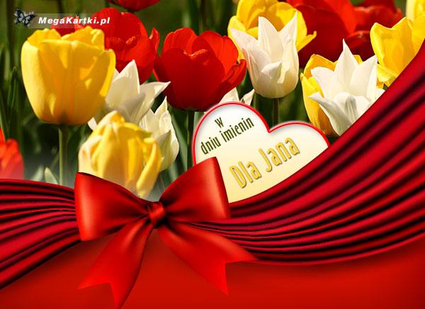 Tulipany dla Jana