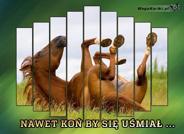 Koń by się uśmiał