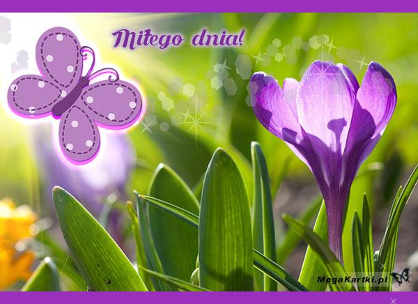 Wiosenny kwiatuszek